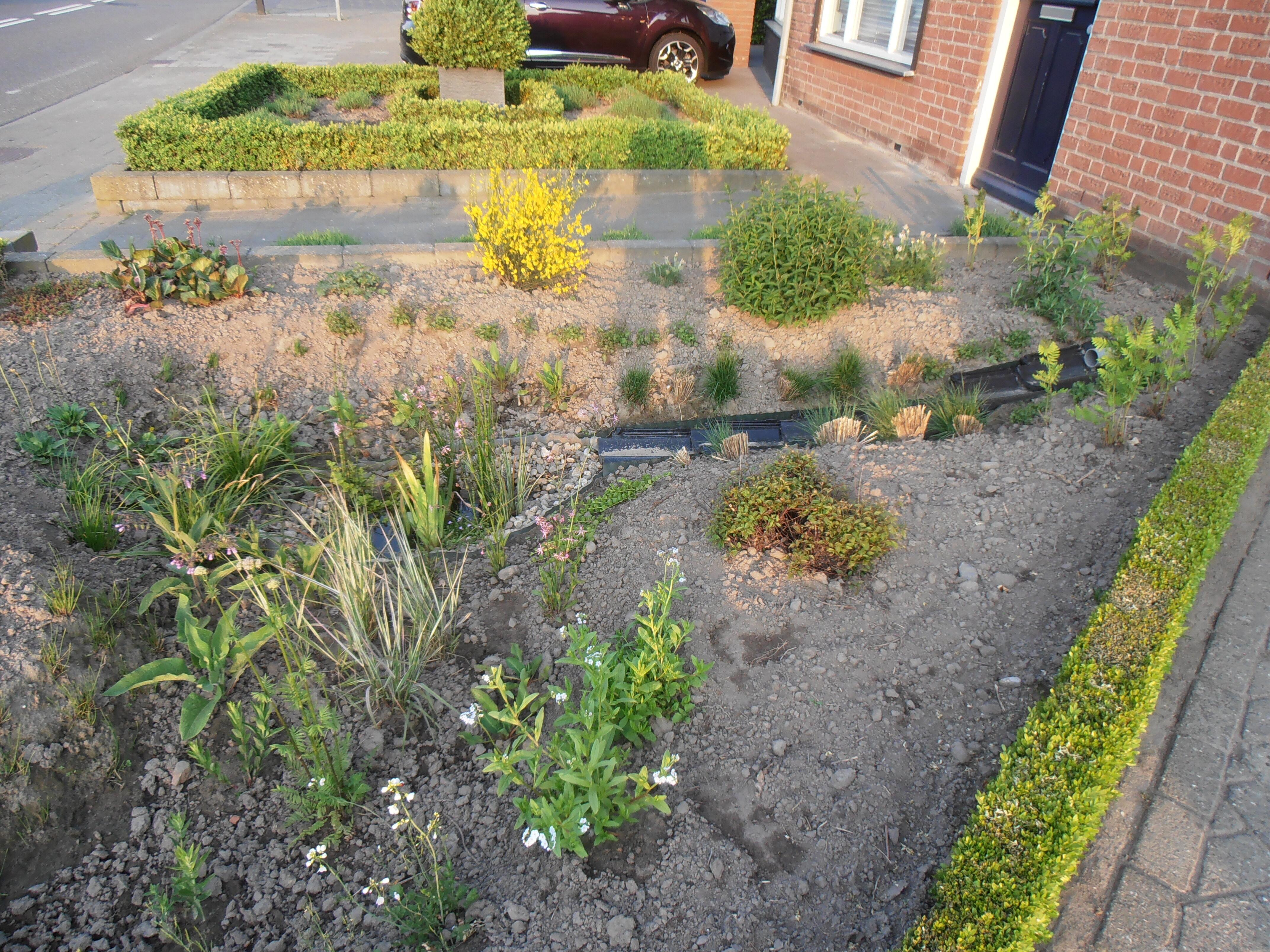 Wadi met planten for Wadi in tuin
