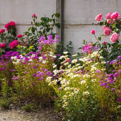 Planten op de juiste plek